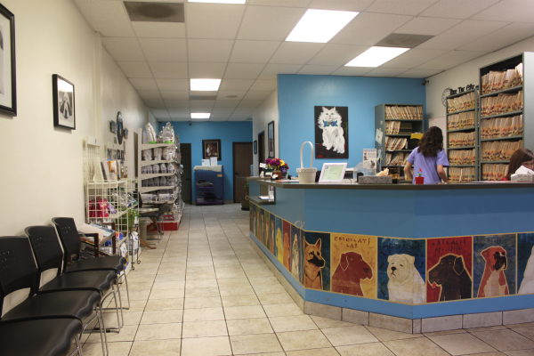 about our veterinary practice  Long Beach, CA